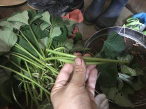 野菜の楽しみ方
